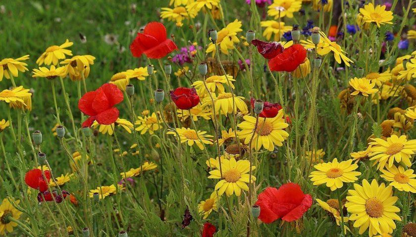 «Лютики-цветочки у меня в садочке»–фотовыставка.
